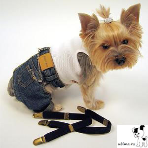 Одежда своими руками для собак йорка